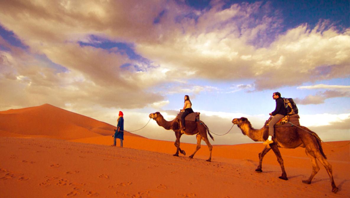 travel-photography-career-sahara-morocco-camels-hillary-fox